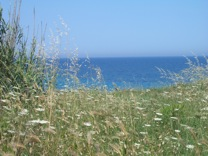 Coast and wild flowers